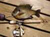 Big Fish Award 2