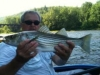 Deleware River Striper