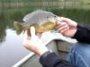Ryne cross sunfish