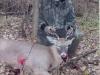 Kyle 2009 Buck