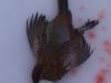 patrick pheasant