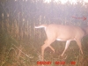 Unknown Buck